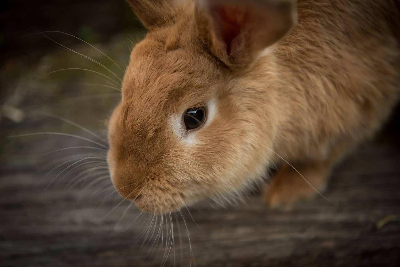Kaninchenimpftage 2018