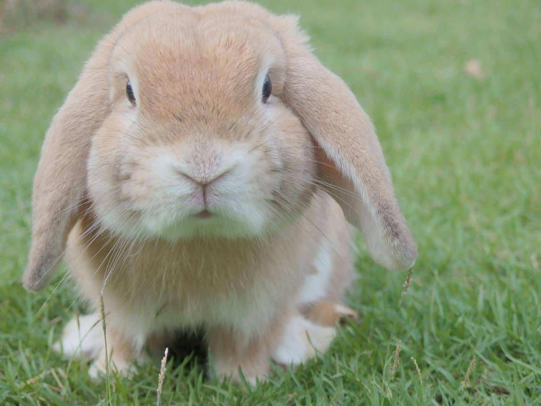 Kaninchenimpftage