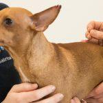Naturheilverfahren Tierarzt Dr Julia Probst