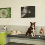 Hausbesuche bei Dr Julia Probst Tierarztpraxis Nürnberg